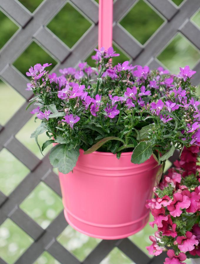Pfanzkästen mit Blumen