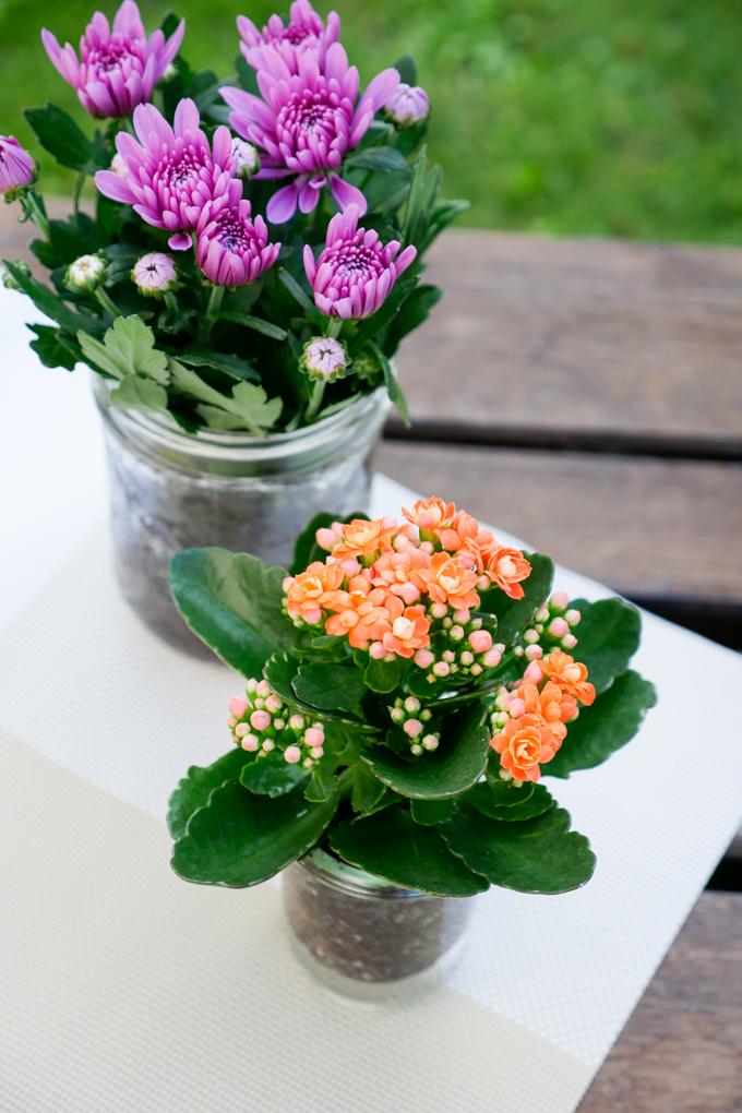 Sommerblumen im Glas