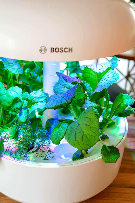 Werbung. Bosch SmartGrow - der Indoor Kräutergarten, der sich selbst versorgt