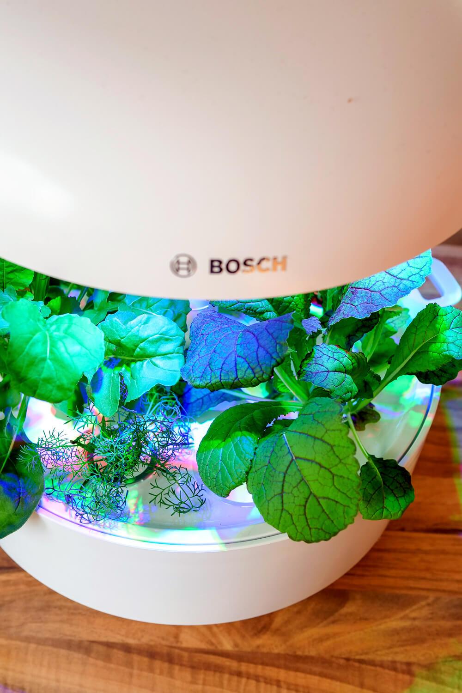 Werbung. Bosch Indoor Gardening mit SmartGrow - mein Produkttest