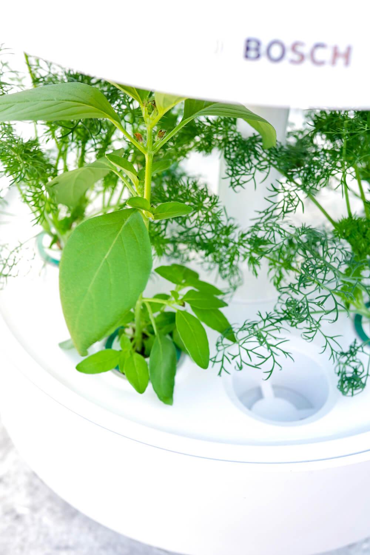 Werbung. SmartGrow - der neue Indoor-Kräutergarten von Bosch, für den man keinen grünen Daumen braucht