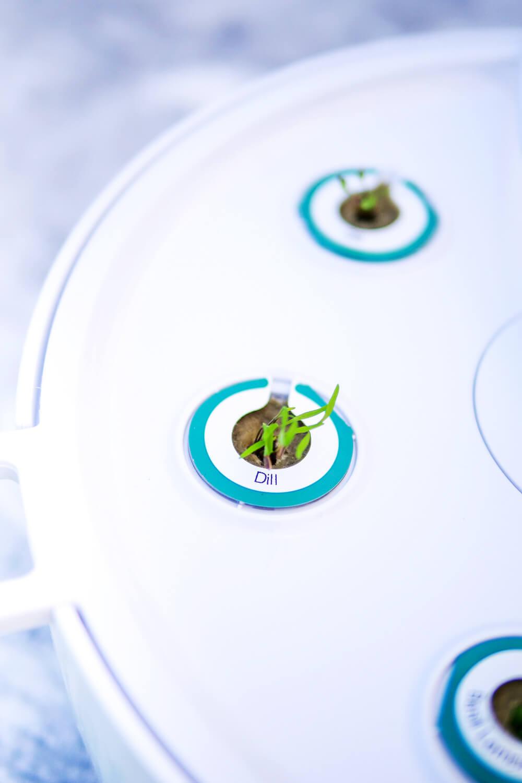 Werbung. Nach nur wenigen Tagen fangen die ersten Kräuter im Bosch SmartGrow an zu wachsen
