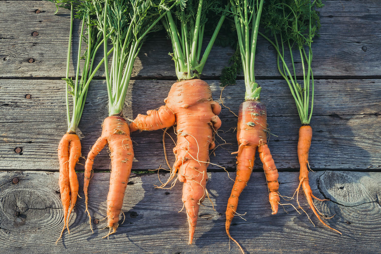 Krumme Karotten aus regionalem Anbau