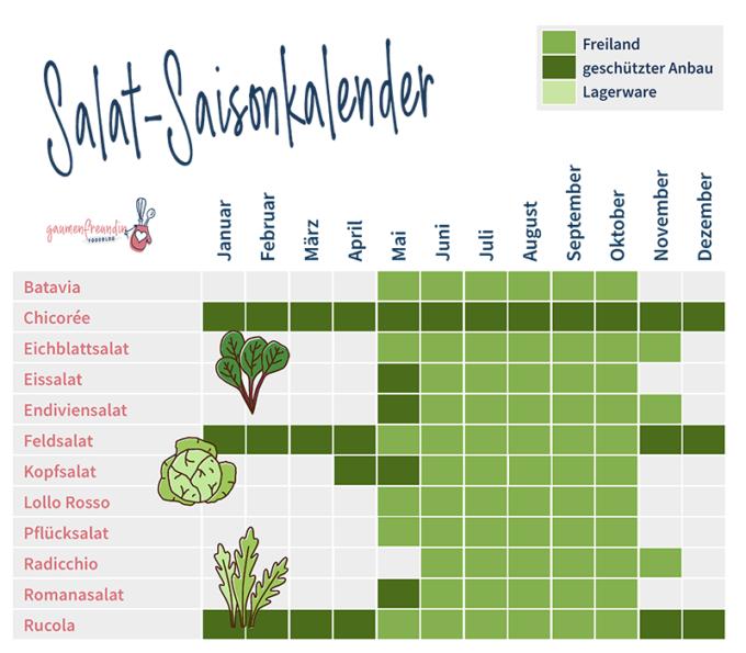 Saisonkalender für Salate, wie Rucola und Feldsalat Infografik