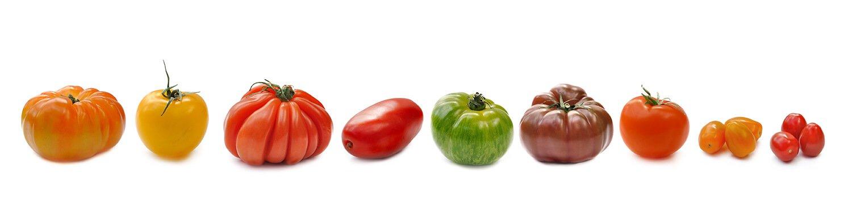 Auswahl verschiedener Tomaten-Sorten