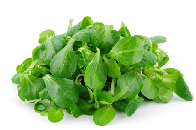 Feldsalat gewaschen